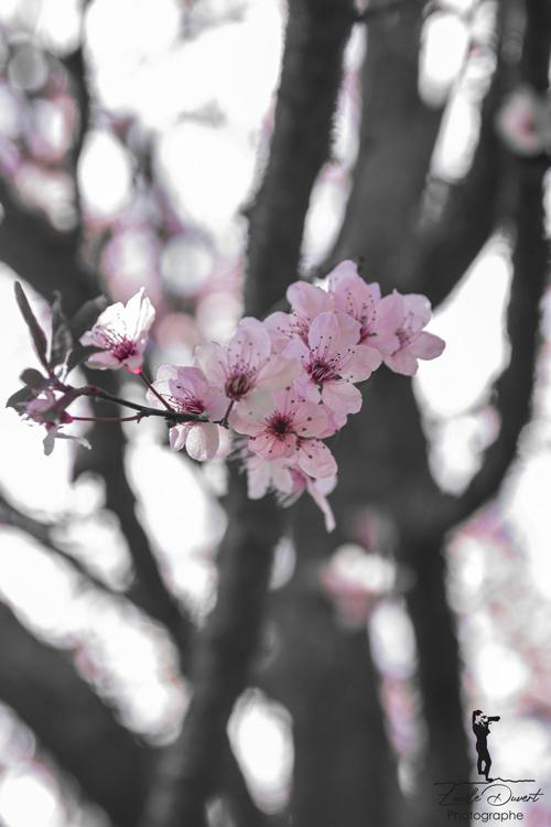photographe-professionnelle-nature-printemps